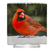 Cardinal In The Snowstorm Shower Curtain