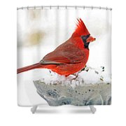 Cardinal In Winter Shower Curtain