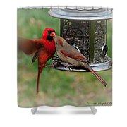 Cardinal Kiss Shower Curtain