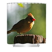 Cardinal Light Shower Curtain