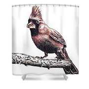 Cardinal Male Shower Curtain