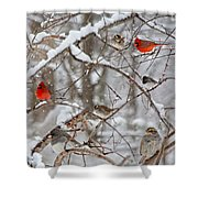 Cardinal Meeting In The Snow Shower Curtain