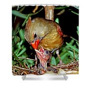 Cardinal Shower Curtain