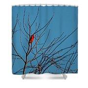 Cardinal Morning Shower Curtain