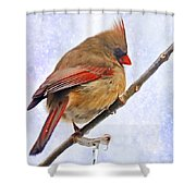 Cardinal On An Icy Twig - Digital Paint Shower Curtain