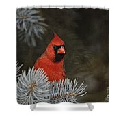 Cardinal Pictures 84 Shower Curtain