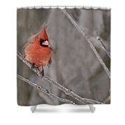 Cardinal Pictures 97 Shower Curtain