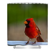 Cardinal Red Shower Curtain