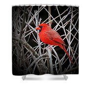 Cardinal Red With Black Shower Curtain