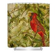 Cardinal Singing Shower Curtain