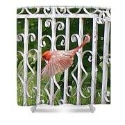 Cardinal Tail Up Landing Shower Curtain