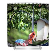 Cardinal Tail Wide Landing Digital Art Shower Curtain