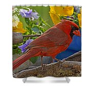 Cardinal With Pansies And Decorations Shower Curtain
