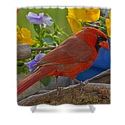 Cardinal With Pansies Shower Curtain