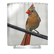 Cardinal Young Female Shower Curtain