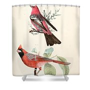 Cardinals Shower Curtain by Philip Ralley
