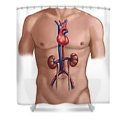 Cardiovascular And Renal Systems Shower Curtain