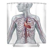 Cardiovascular System Female Shower Curtain