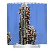 Cardon Cactus And Fruit  Shower Curtain