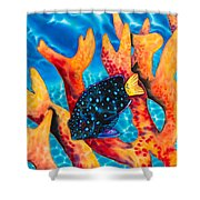 Caribbean Damselfish Shower Curtain