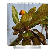 Caribbean Parakeet Shower Curtain