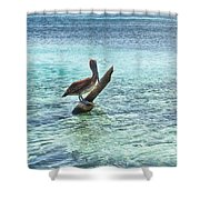 Caribbean Pelican I Shower Curtain