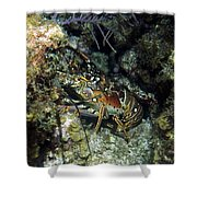 Caribbean Reef Lobster On Night Dive Shower Curtain