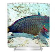 Caribbean Stoplight Parrot Fish In Rainbow Colors Shower Curtain