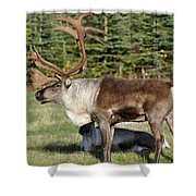 Caribou Shower Curtain