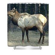 Elk Side Profile - Banff, Alberta Shower Curtain