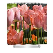 Caring Pink Tulip Time Shower Curtain