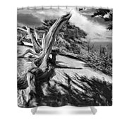 Carmel Beach City Park Black And White Shower Curtain