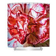 Carnation Watercolor Shower Curtain