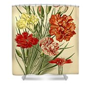 Carnations Shower Curtain by Philip Ralley