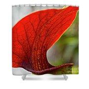 Carnivorous Plants 2 Shower Curtain