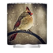 Carolina Cardinal Shower Curtain