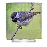 Carolina Chickadee On Angled Perch Shower Curtain