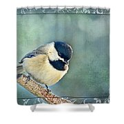 Carolina Chickadee With Decorative Frame I Shower Curtain