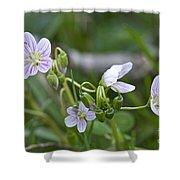 Carolina Spring Beauty - Wide-leaved Spring Beauty - Claytonia Caroliniana Shower Curtain