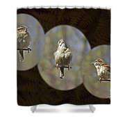 Carolina Wren - Thryothorus Ludovicianus Shower Curtain