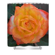 Caroty Splendor - Rose Shower Curtain