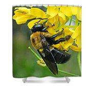 Carpenter Bee Shower Curtain