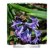 Carpenter On Hyacinth Shower Curtain