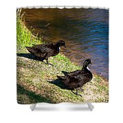 Carpenters Park-ducks Shower Curtain