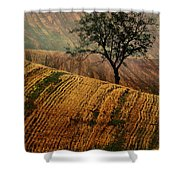 Carpet Fields Of Moravia Shower Curtain