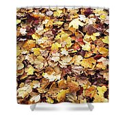Carpet Of Leafs Shower Curtain