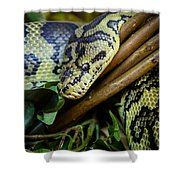 Carpet Python  Shower Curtain