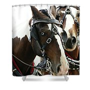 Carriage Horse - 2 Shower Curtain