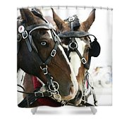 Carriage Horse - 3 Shower Curtain