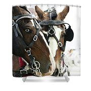 Carriage Horse - 4 Shower Curtain